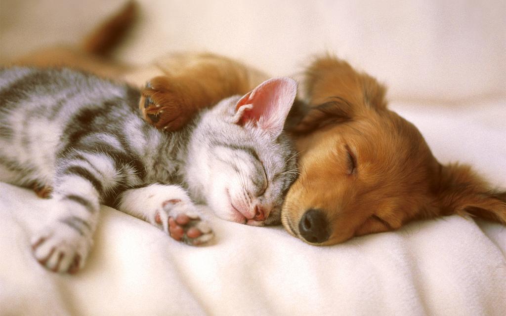 Картинки смешные, картинка с животными спокойной ночи