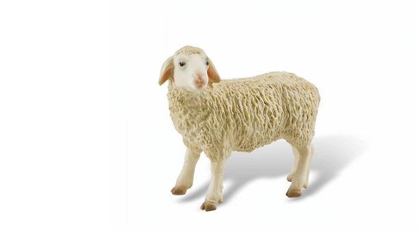 il prezzo della lana è alle stelle