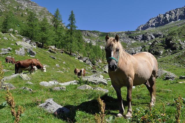 Carne equina la crisi che porta i cavalli al macello - Avere un cavallo ...