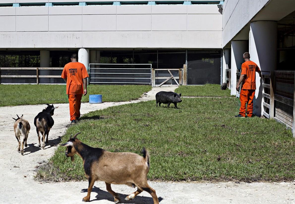 Il centro penitenziario in Florida