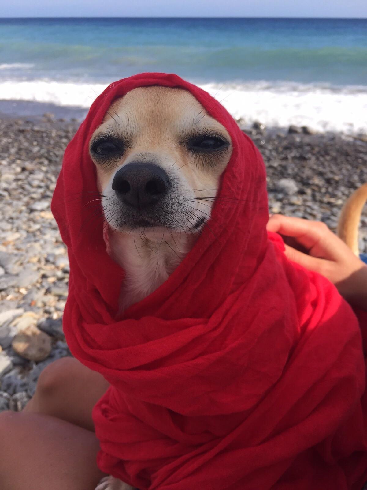 Le migliori spiagge per cani in Italia - 2016 Achille