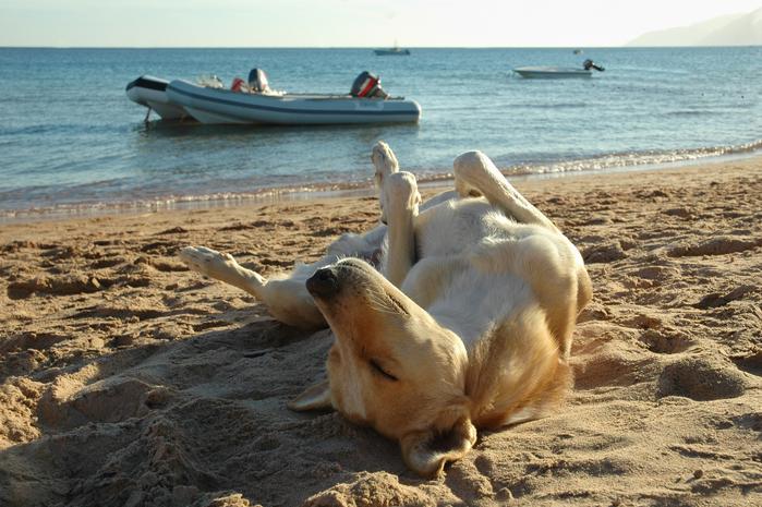 Le migliori spiagge per cani in Italia Toscana