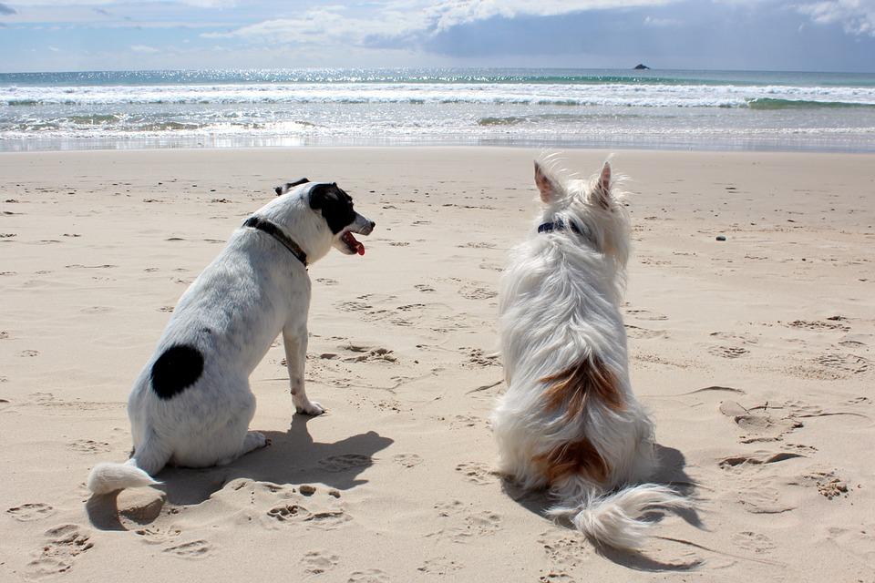 Le migliori spiagge per cani in Italia Lazio