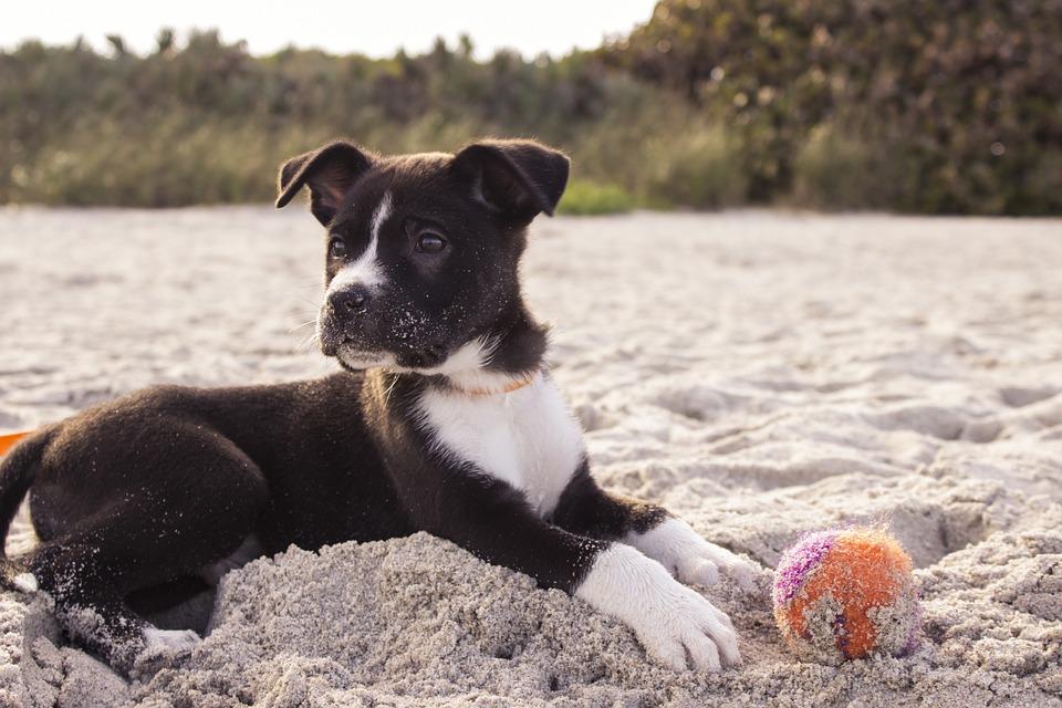 Le migliori spiagge per cani in Italia Veneto