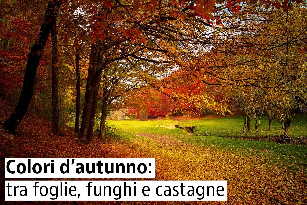 I boschi pi belli d 39 italia idealista news for Vacanze a novembre in italia