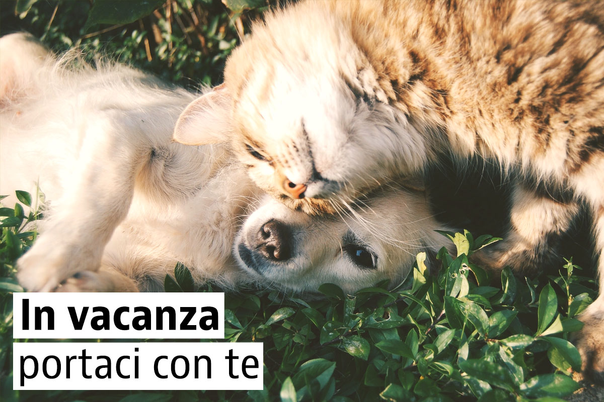 Case vacanze pet-friendly