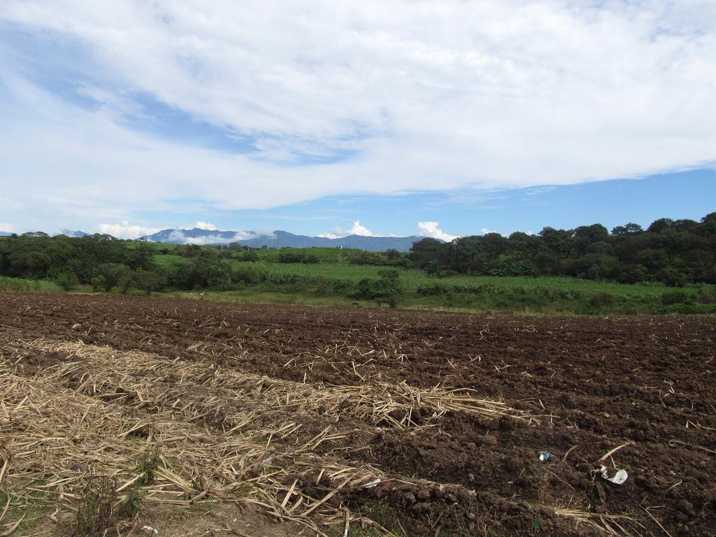 Imu Terreni Agricoli 2018: Le Informazioni Per Versamento Dellu0027imposta