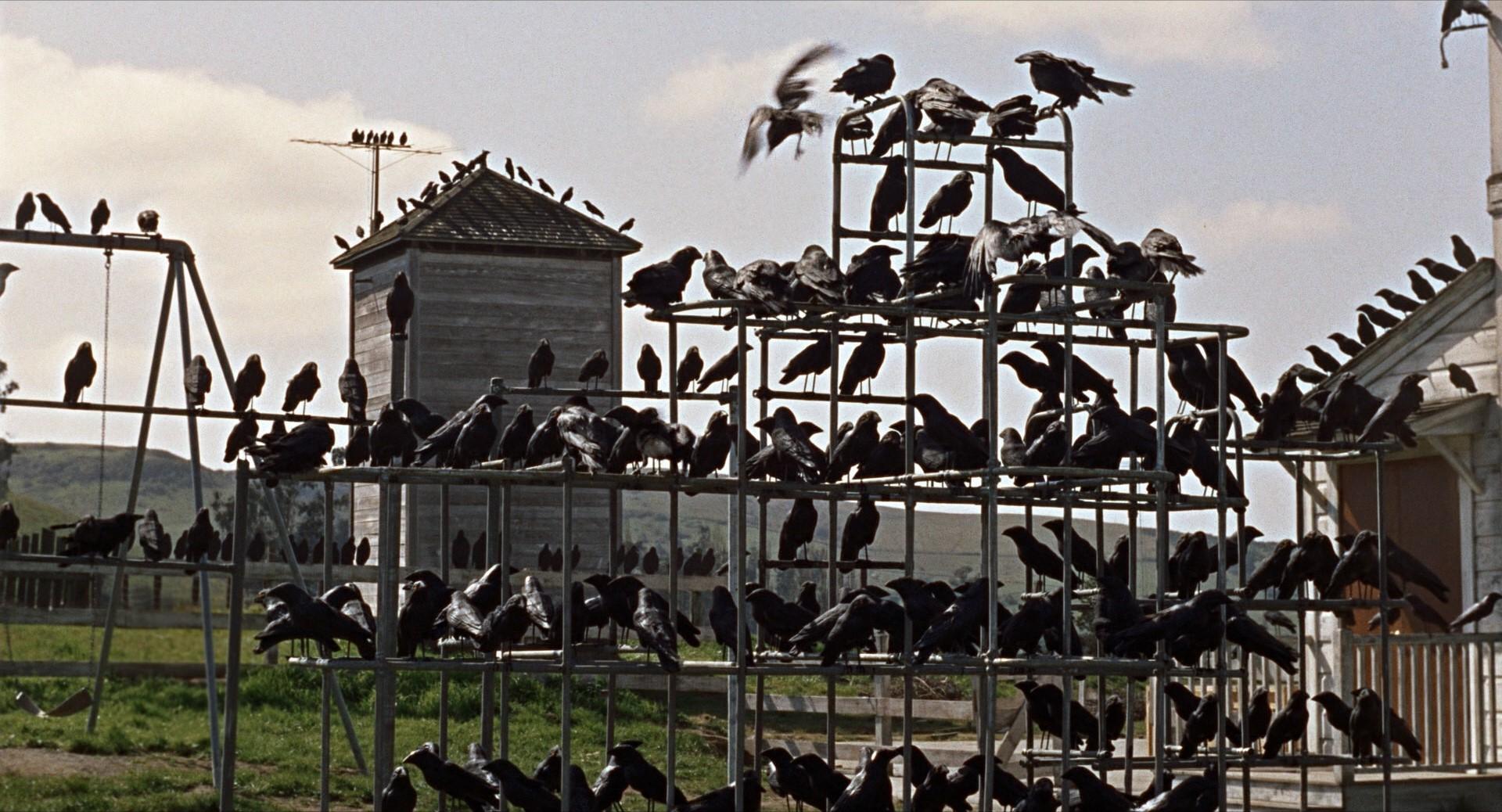 """Fotogramma del film """"Gli uccelli"""""""