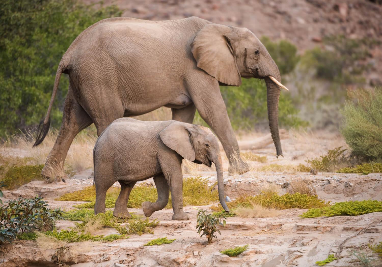 I due sposi potranno ammirare elefanti, leoni e rinoceronti / Hoanib Valley Camp