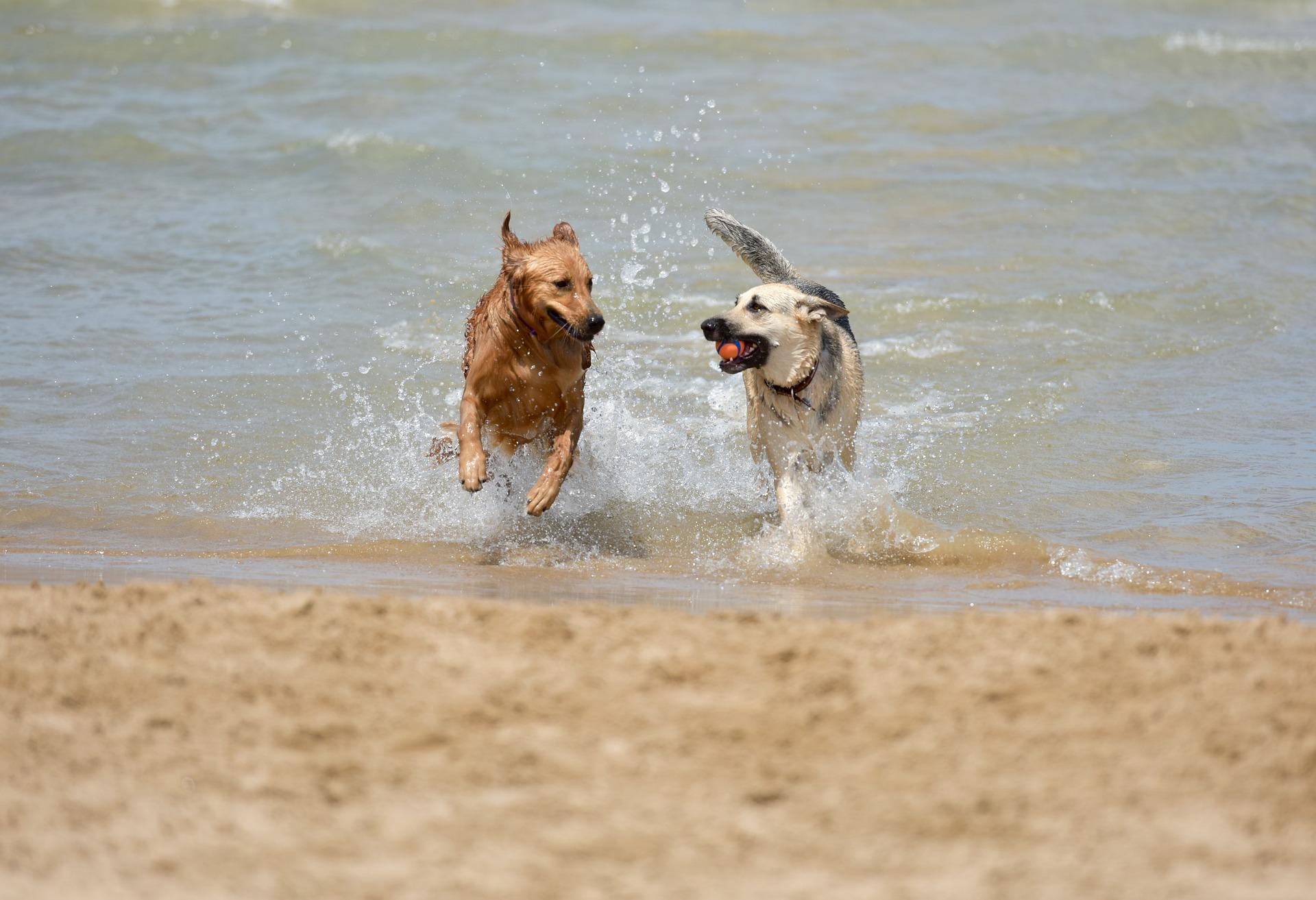Rimini: via libera ai cani in spiaggia