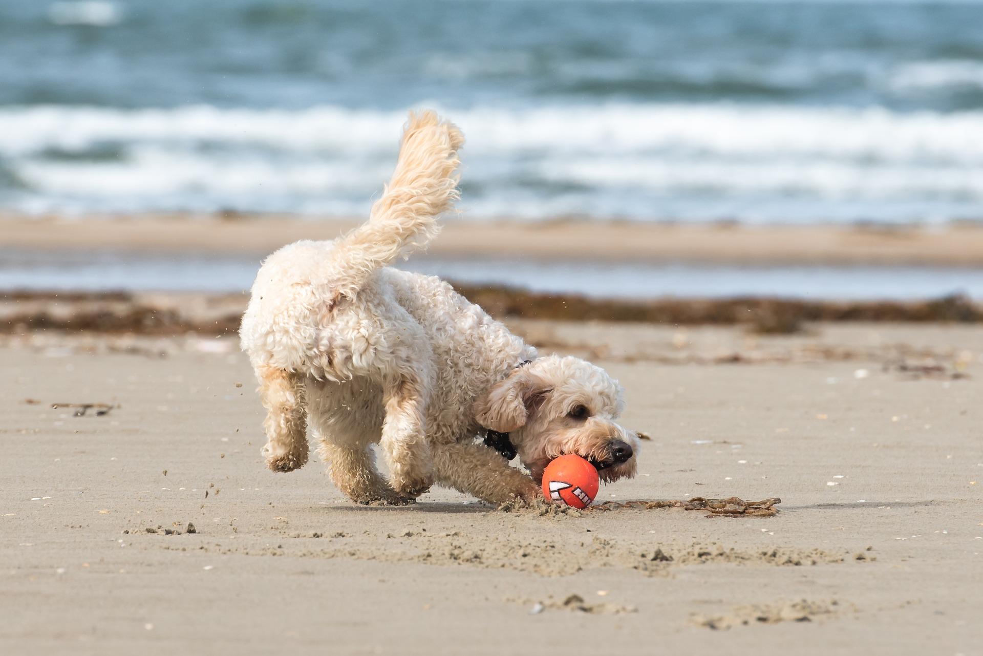 Savona: la prima spiaggia dog friendly d'Italia