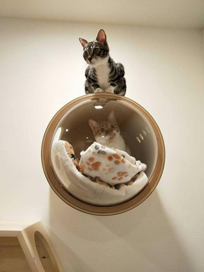The Idealist Cat Video