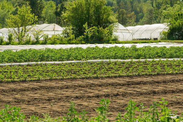 Cacolo IMU sui terreni agricoli