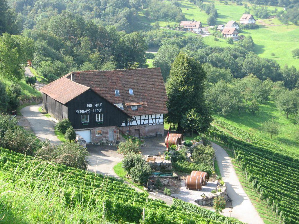 Vista generale del vigneto / Schlafen im Weinfass