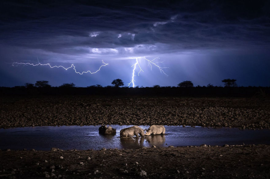 'Wildlife Under Lightning'