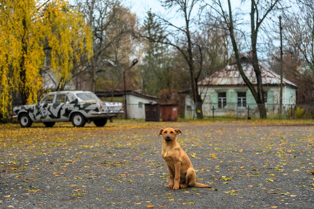 La vita a Chernobyl oggi
