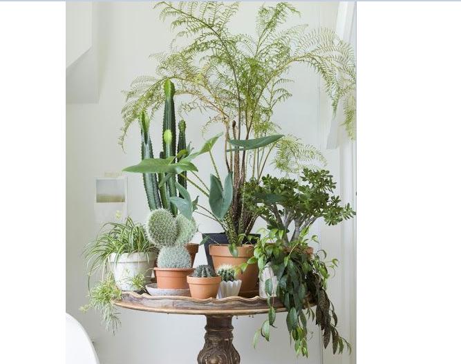 Le piante migliorano anche la salute