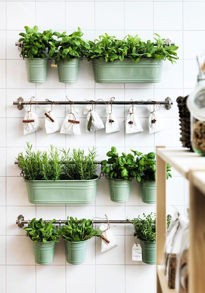Scegli piante aromatiche