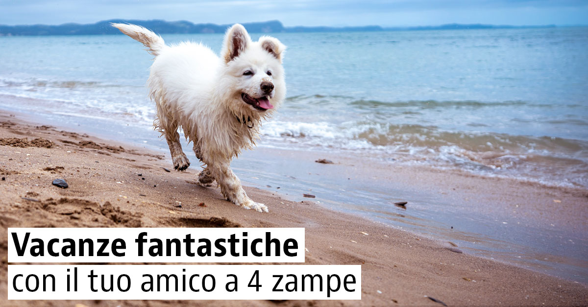 Spiagge per cani in Italia