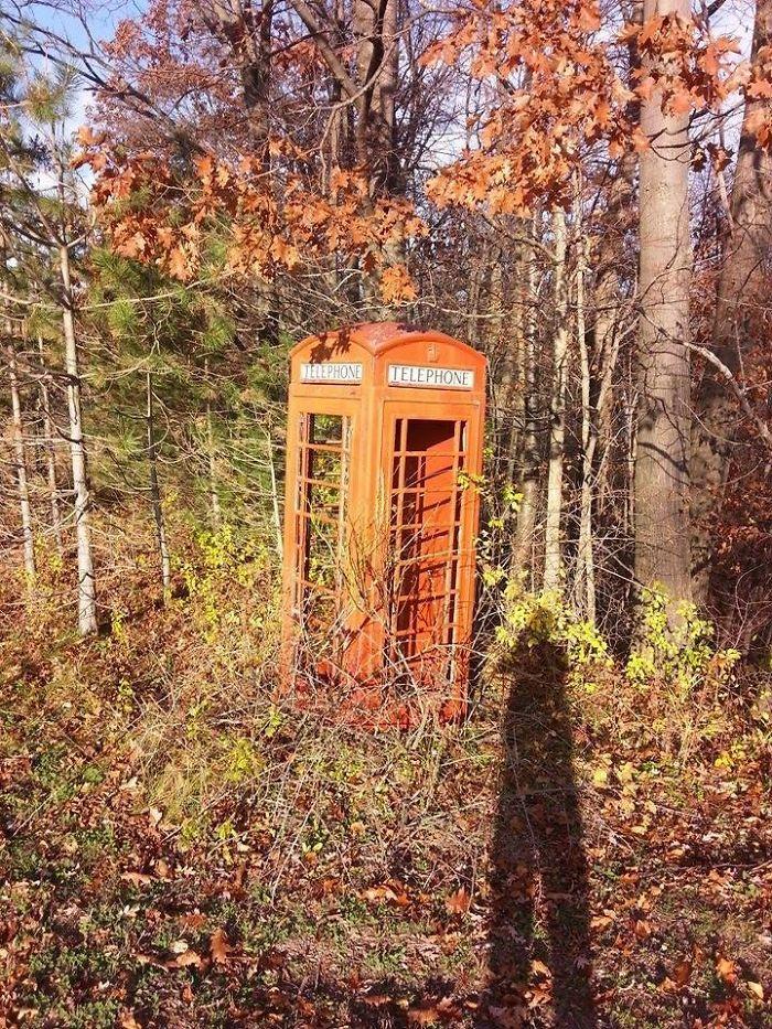 Una cabina telefonica in mezzo al bosco / Bored Panda