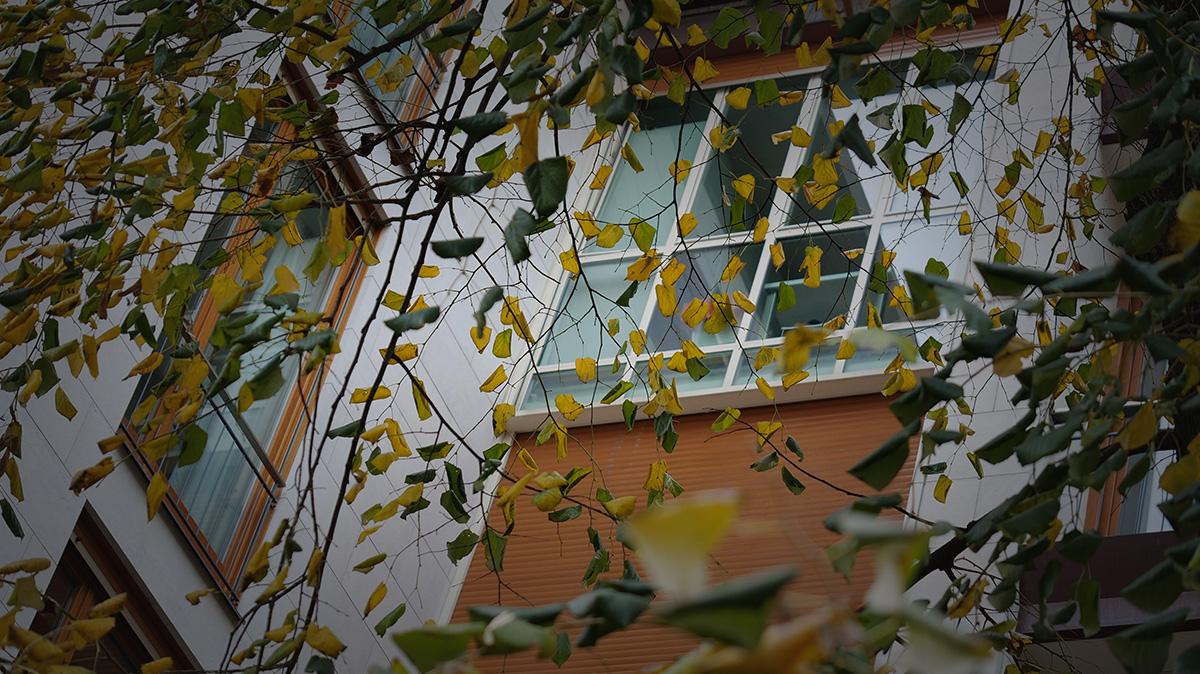 Una delle finestre / Giovanni De Faveri