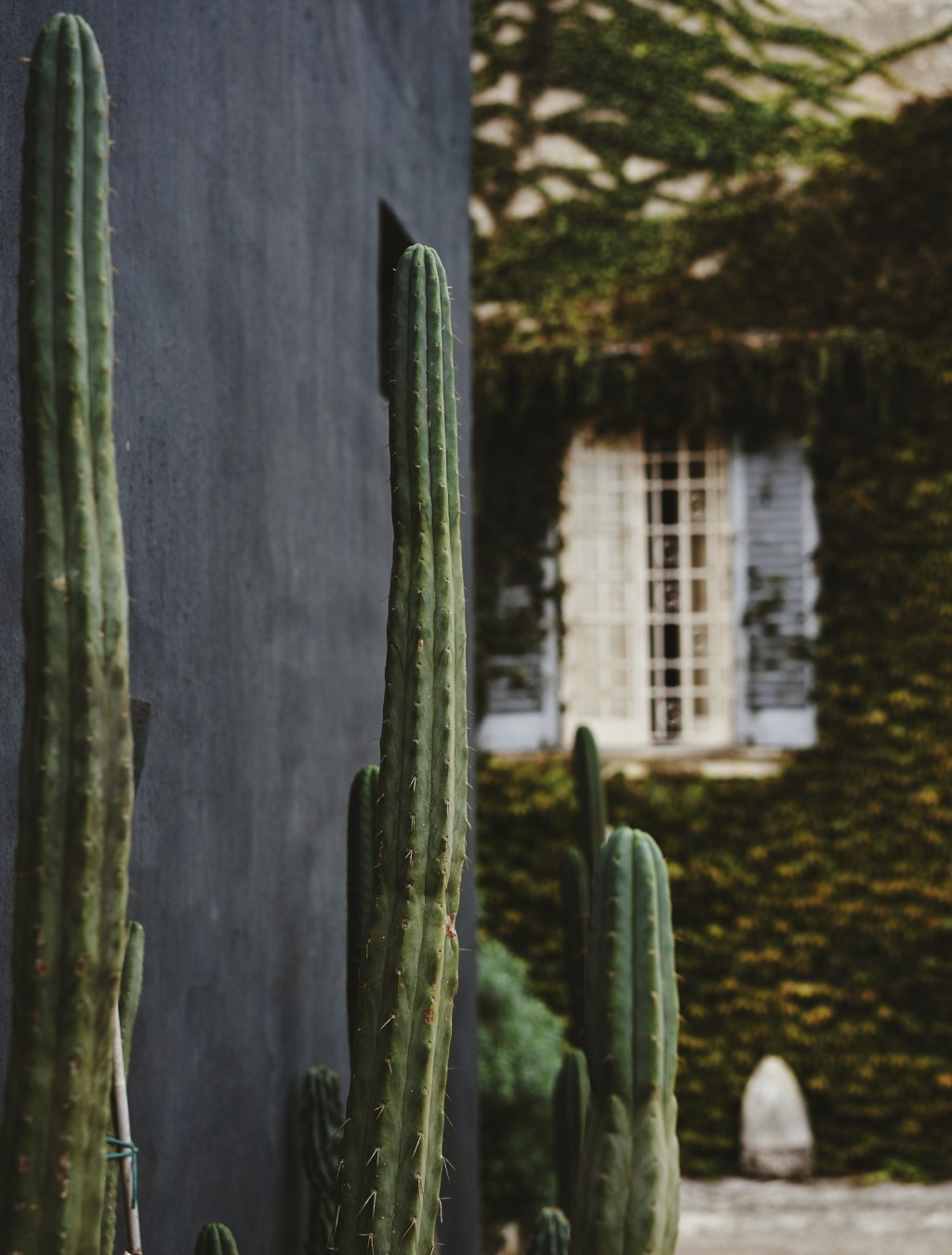 I cactus