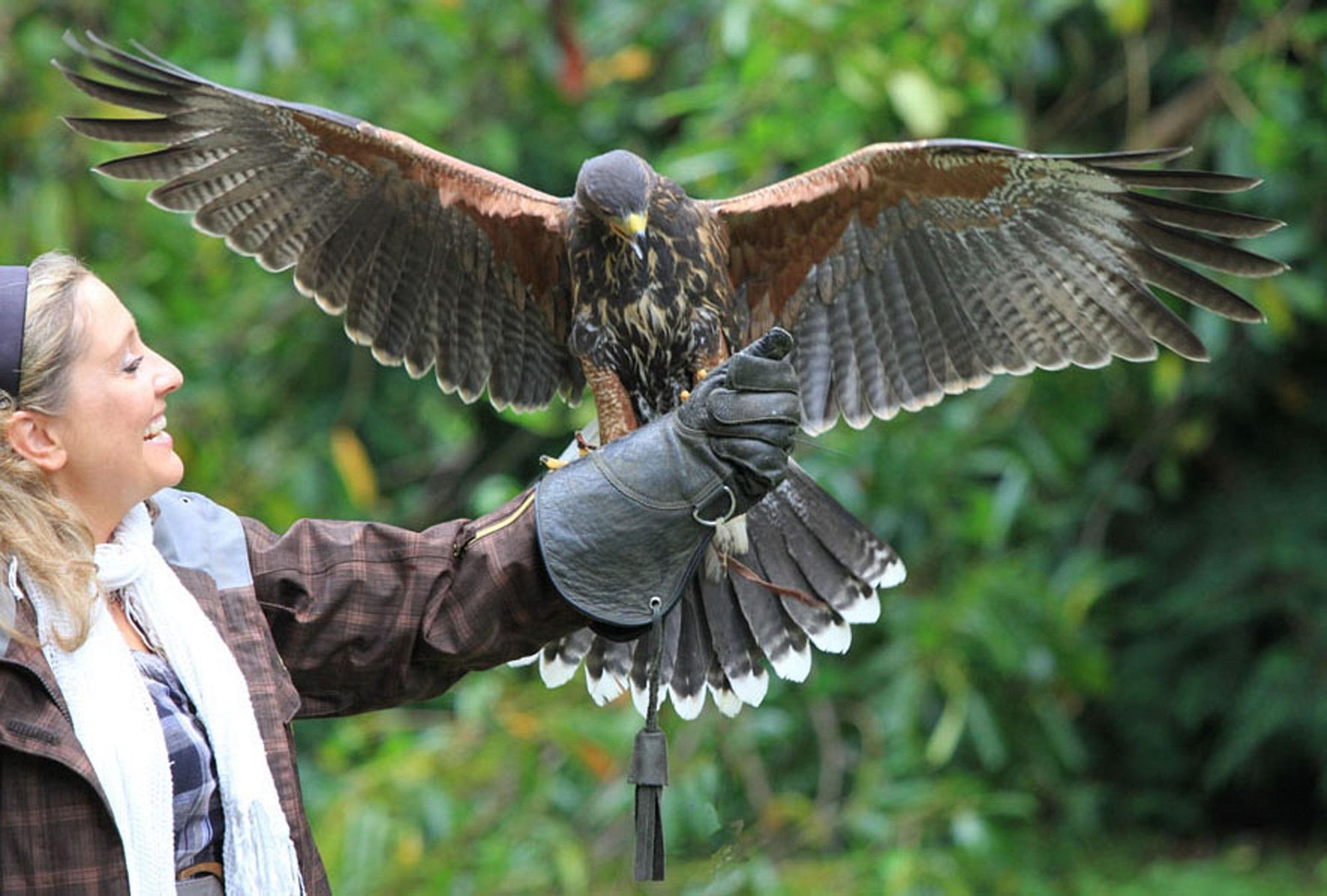Club di falconeria / Ashford Castle