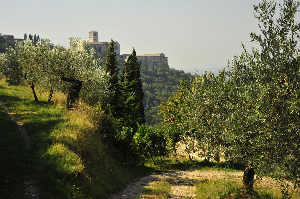 Bosco di San Francesco, Assisi (PG)