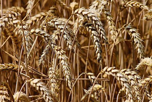 World pasta day, Cia: pi? sostegno a grano duro italiano