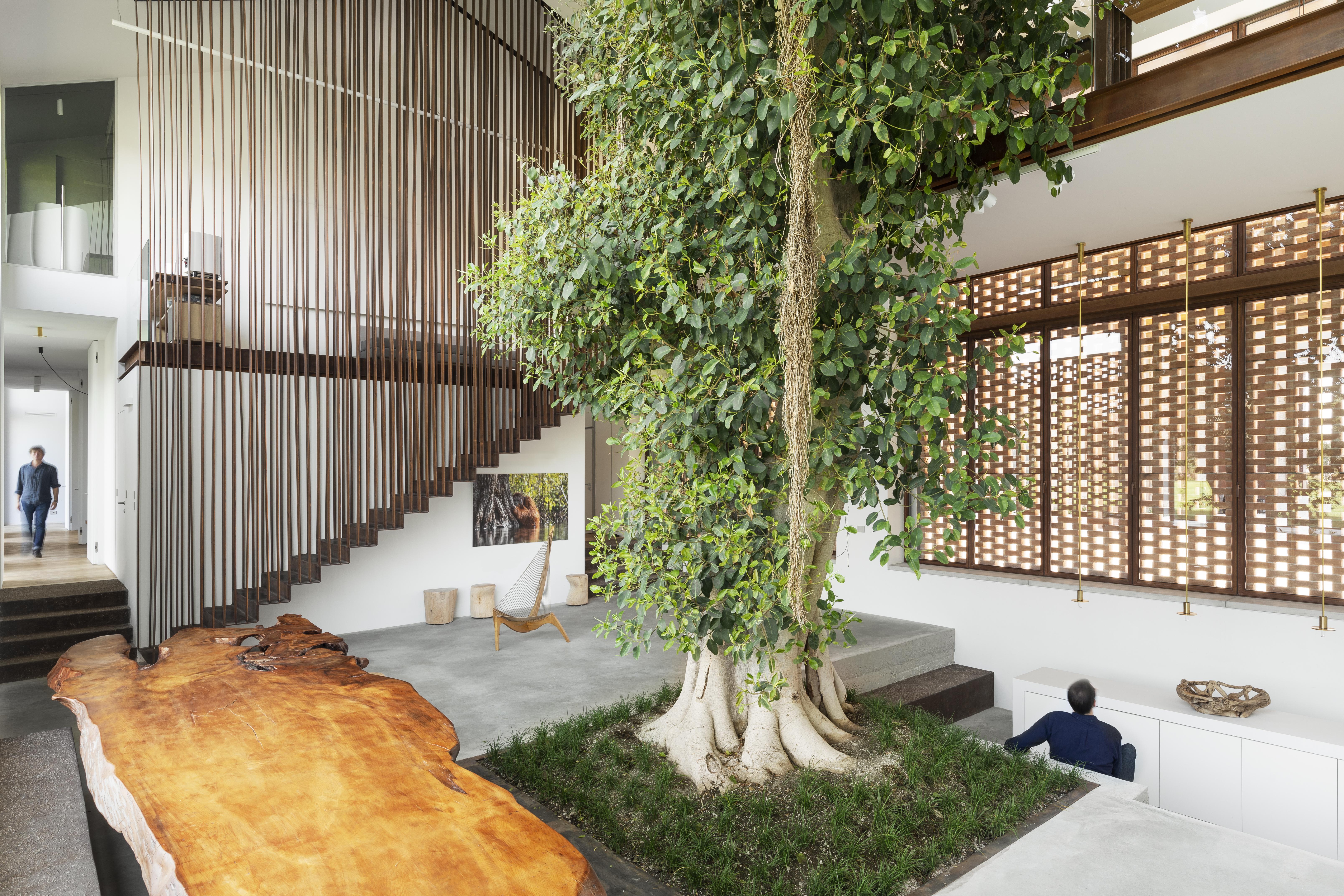 Casa intorno all'albero