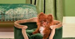 Poltrone e divani extra lusso pensati e realizzati per gli animali domestici