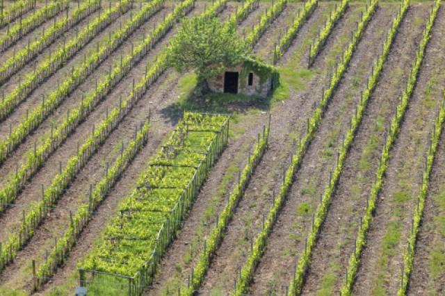 Charming Imu Sui Terreni Agricoli, Tutte Le Novità Sul Pagamento E Il Possibile  Slittamento. Gtres