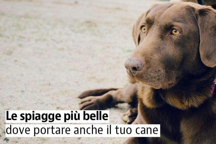 Le migliori spiagge per cani in Italia