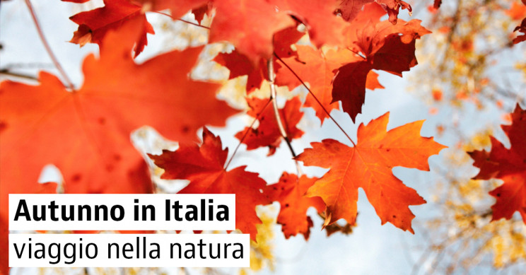 I boschi più belli d'Italia